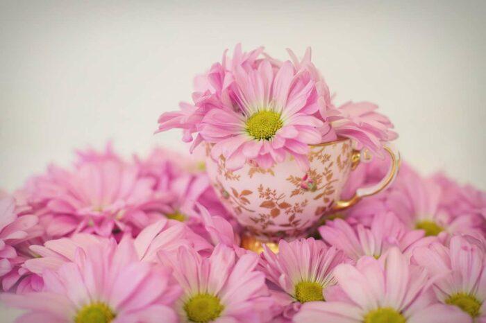 Pink daisy - A.Brask
