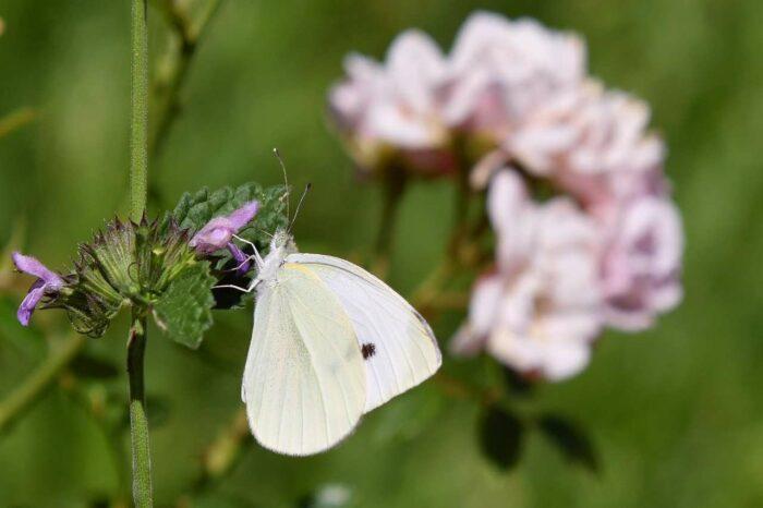 Butterfly - A.Brask